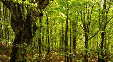 Seeing the Forest and the Trees:  Pairing of Technology and In-house Counsel